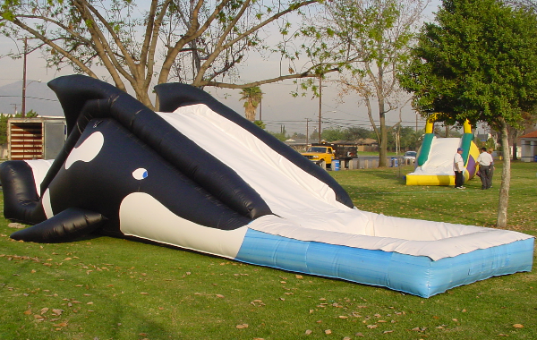 Whale Water Slide