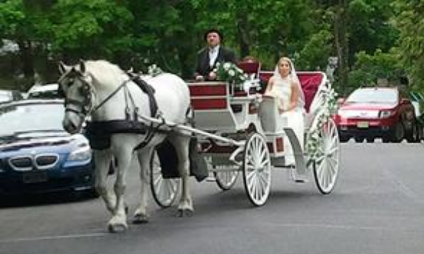Wedding Carriage      Horse and Carriage     Indian Weddings